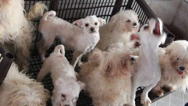 Mais de 100 cachorros são resgatados de canil clandestino em SP