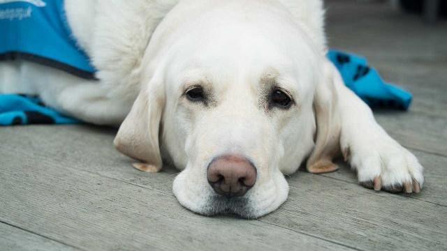 Quanto custa ter um cachorro? Faça as contas para evitar surpresas