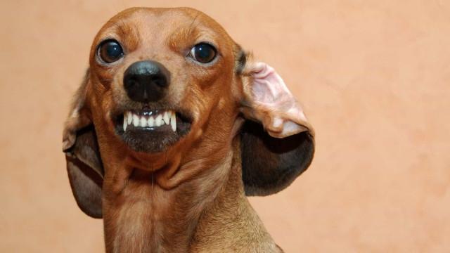 10 coisas que você faz e seu cão odeia