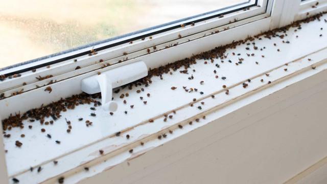Infestação de moscas invade cidade na Bielorússia; vídeo