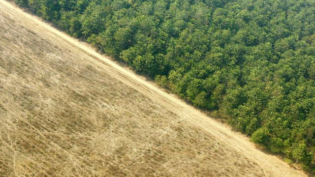 ONG indica alta de 39% no desmatamento da Amazônia no último ano