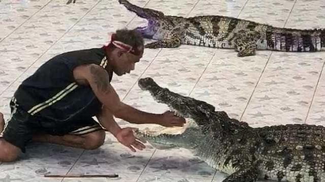 Na Tailândia, crocodilo ataca treinador durante demonstração; vídeo
