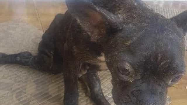 Polícia resgata centenas de animais em situação de maus-tratos no DF