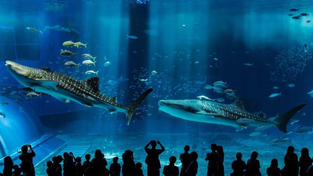 Mergulhe nos aquários mais incríveis do mundo