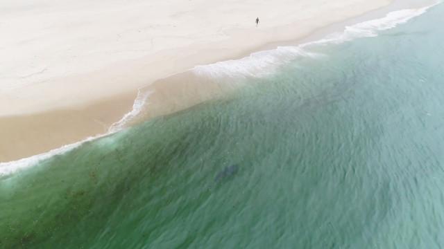 Tubarão é avistado a poucos metros da praia nos Estados Unidos