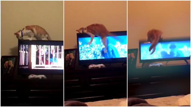 Gato perde equilíbrio e quebra televisão