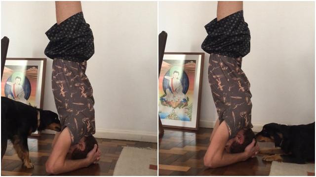 Cachorro não gosta de ver o dono fazendo yoga