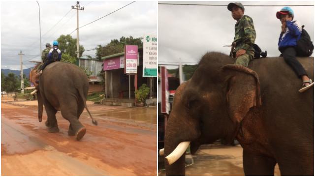 Criança no Vietnã vai à escola montada em elefante