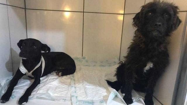 Homem é preso por esfaquear dois cachorros na zona sul de SP