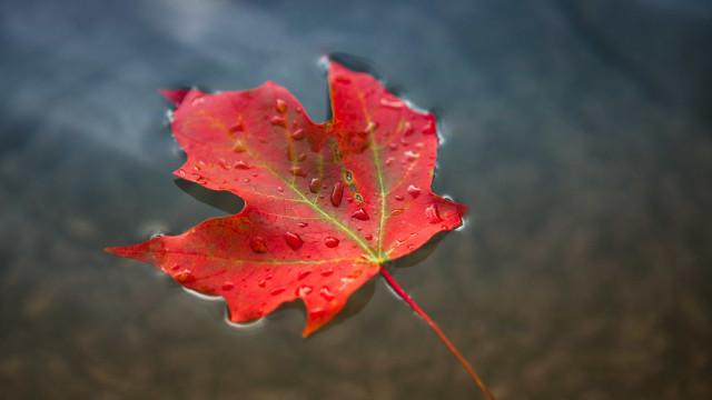 Extrato de folha de bordo é aposta em tratamentos antienvelhecimento
