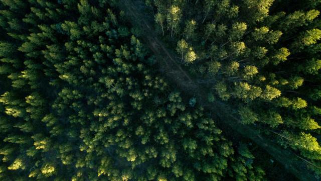 Dia da Árvore: desmatamento vem caindo, mas ainda há desafios