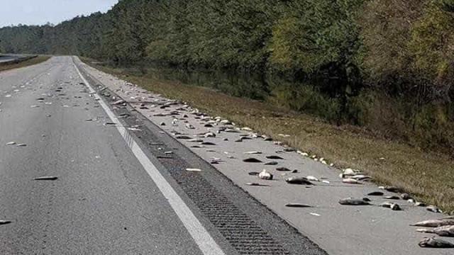 Furacão Florence deixa milhares de peixes mortos em estrada nos EUA