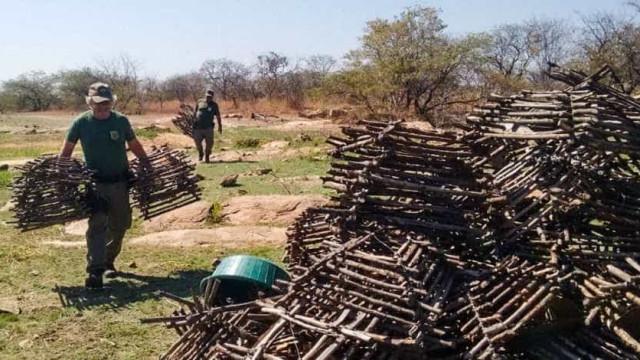 Ibama evita tráfico diário de cerca de 64,4 mil aves silvestres na PB
