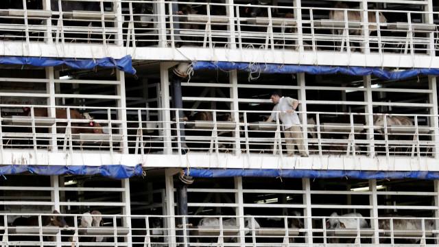 Europa aponta falhas no controle sanitário de exportações do Brasil