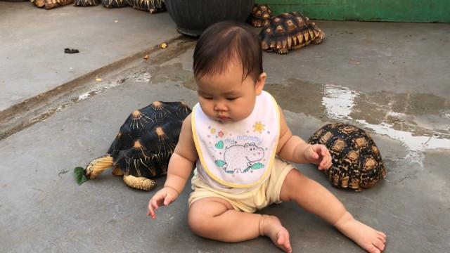 Bebê faminto rouba comida da tartaruga