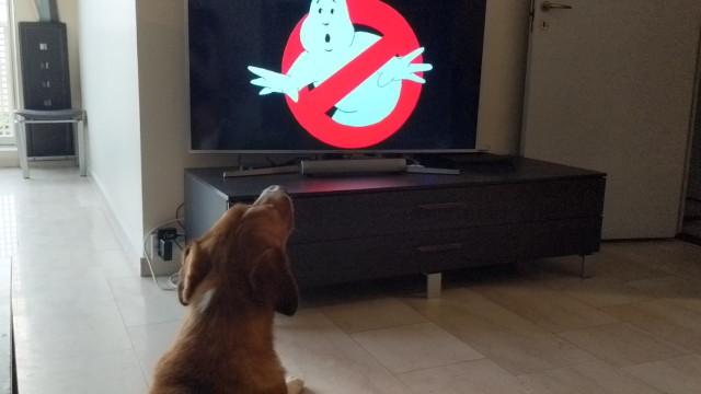 Cachorro adora cantar o tema do filme 'Ghostbusters'