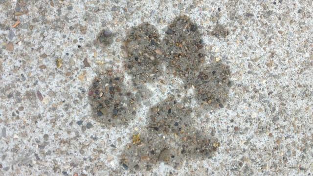 Cerca de 100 cães são encontrados mortos em Juazeiro do Norte, no CE