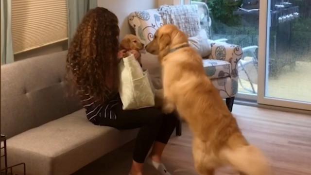 Cachorro é surpreendido por sua versão miniatura e reage