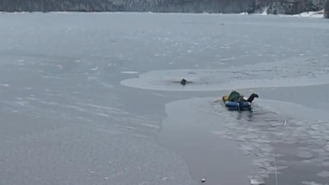 Homens resgatam cão que caiu em lago gelado na Rússia; assista