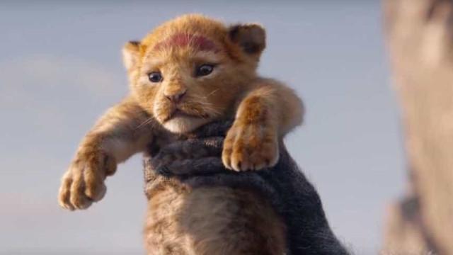 Simba vira leão 'de carne e osso' em novo filme de 'O Rei Leão'