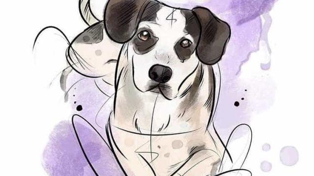 Cadela morta no Carrefour ganha homenagens nas redes