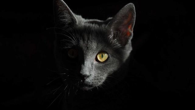 Justiça determina que Carrefour não pratique 'extermínio de gatos'
