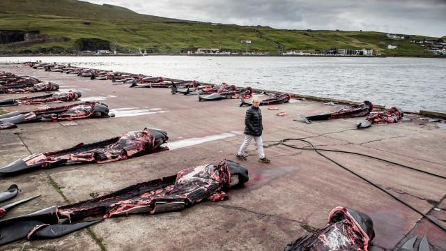 Japão retomará no próximo ano caça de baleias em seu território