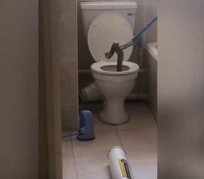 Cobra gigante se recusa a sair de vaso sanitário; veja!