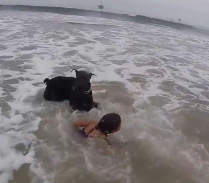 Cão 'salva-vidas' protege menina do perigo do mar