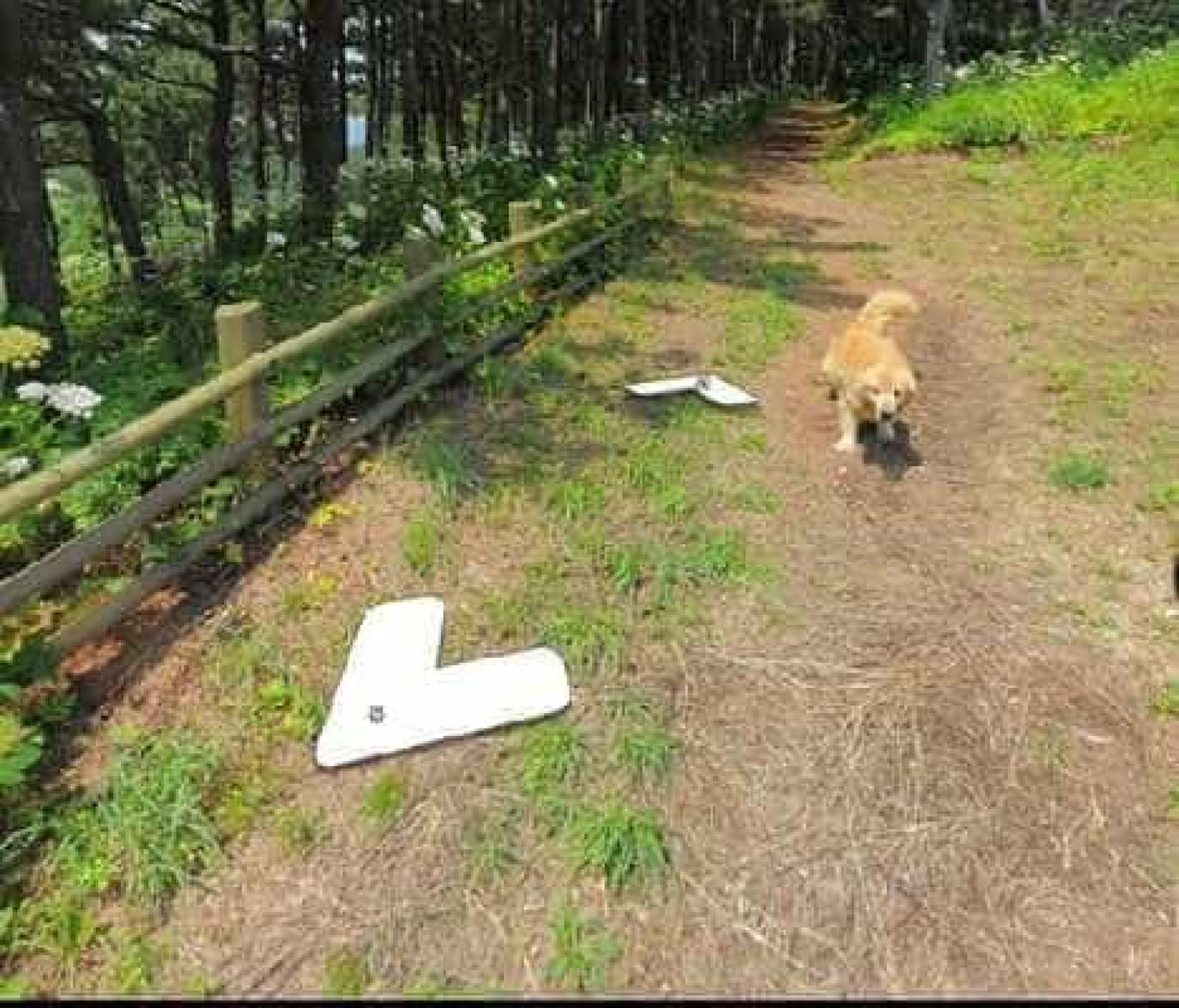 Cachorro segue carro do Google e aparece nas imagens do Street View