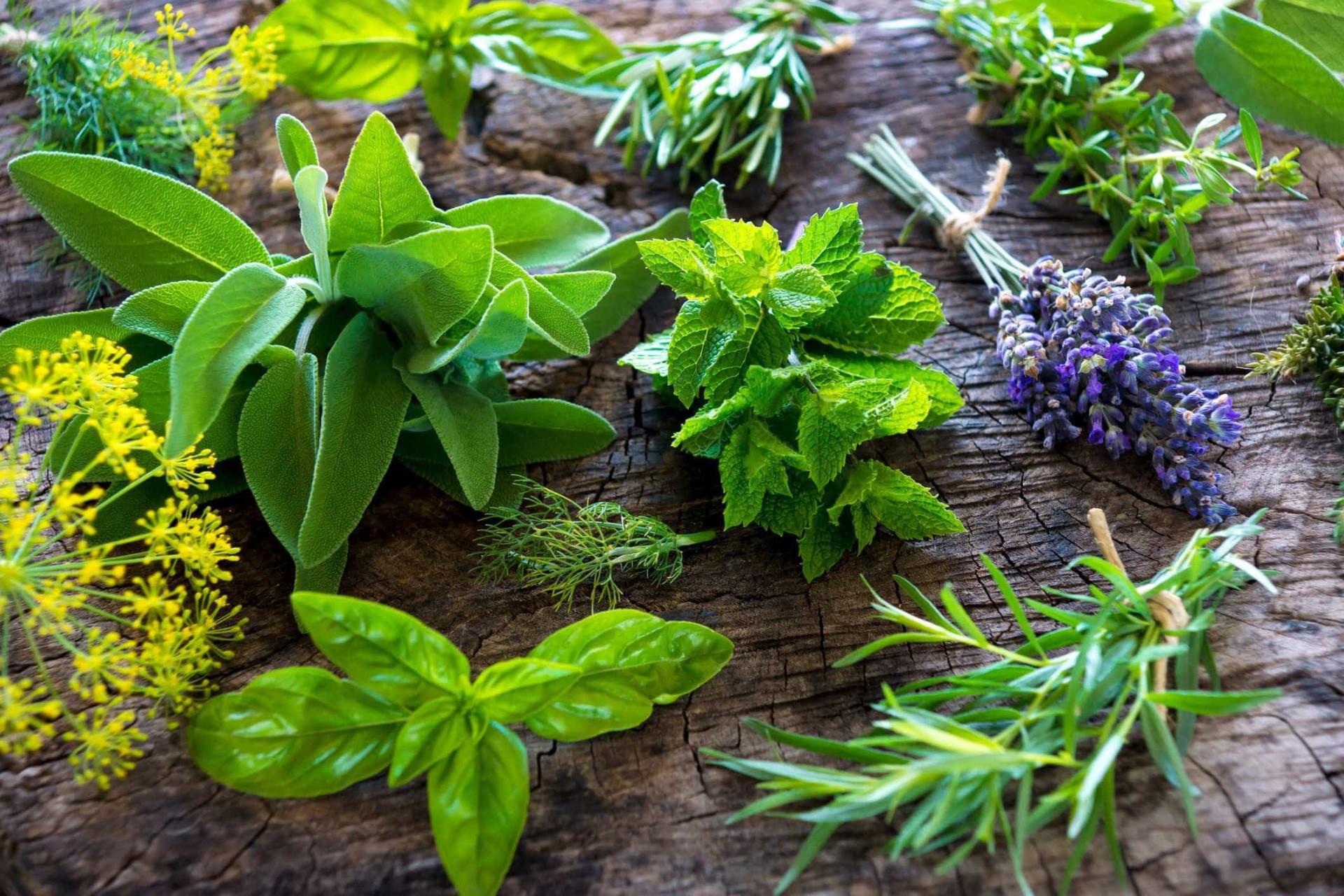 7 ervas aromáticas que vão trazer sabor e saúde às refeições