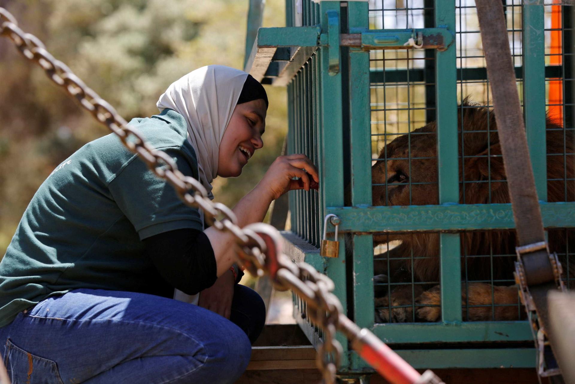 Guerra na Síria também deixa animais refugiados
