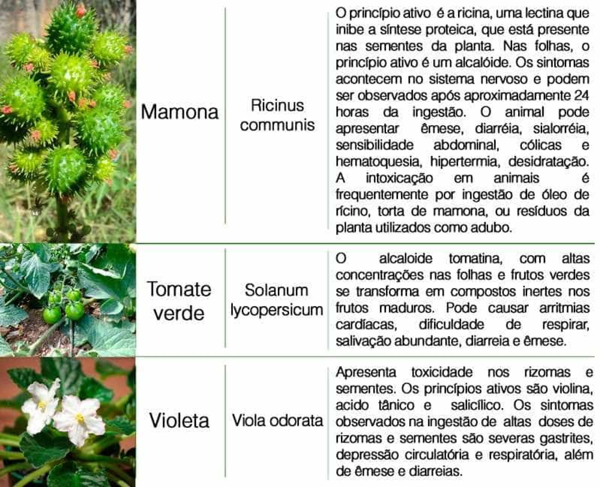 16 plantas domésticas tóxicas para animais de estimação