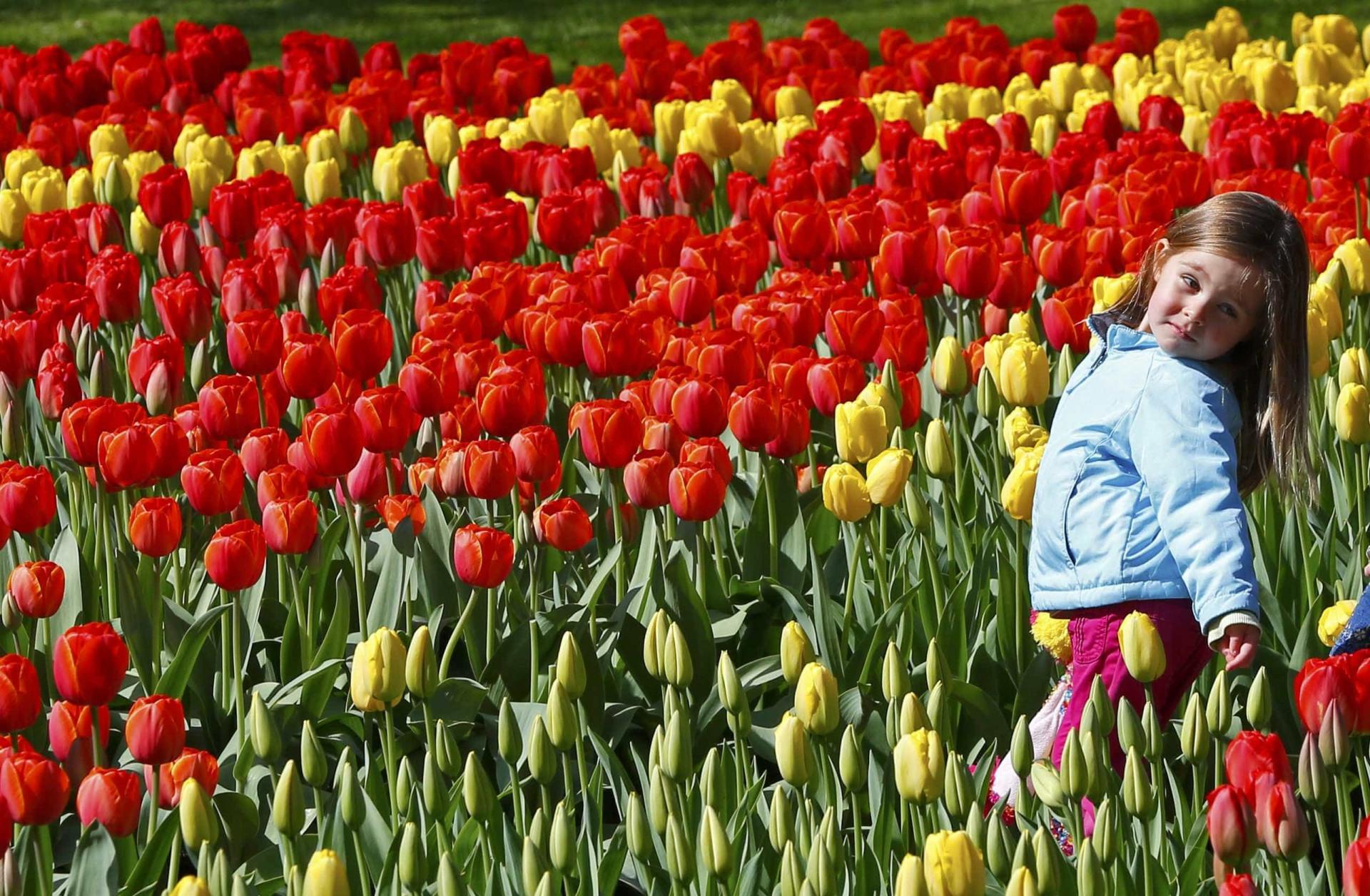 Aproveite a primavera na Holanda e conheça os jardins de Keukenhof