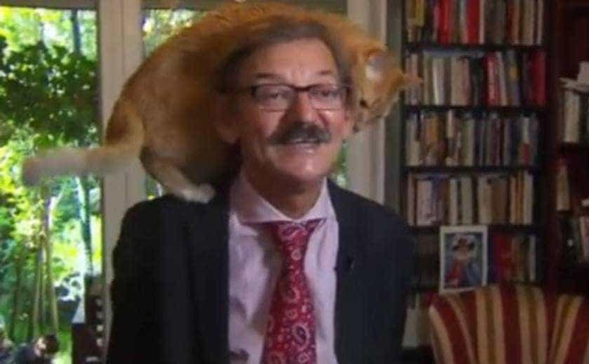 Gato interrompe professor durante entrevista ao vivo; vídeo