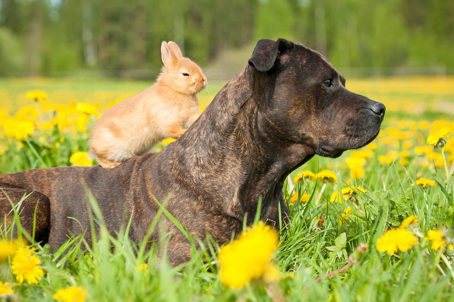 Dia do Amigo: as amizades mais inesperadas do reino animal