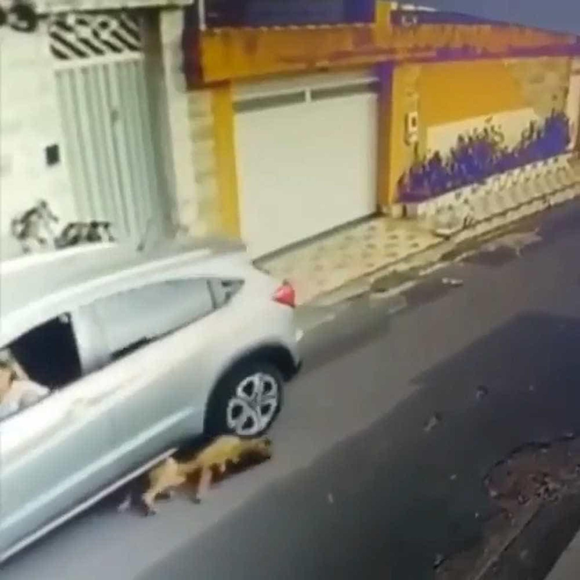 Vídeo de mulher atropelando cachorros em São Luís revolta internautas