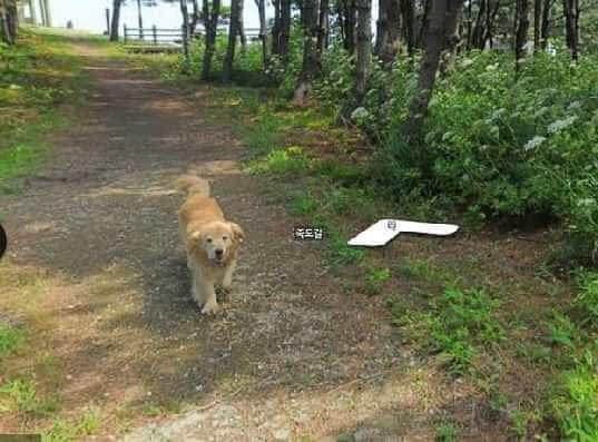 Cachorro segue carro do Google Street View