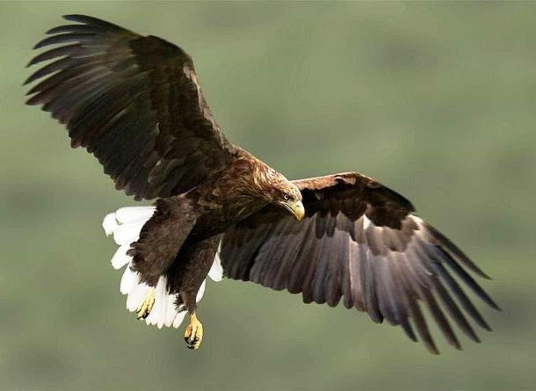 Conheça as maiores aves de rapina do mundo